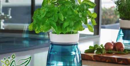 نحوه آبیاری سبزی خوردن در گلدان