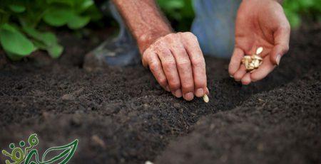 کاشت صیفیجات در گلدان