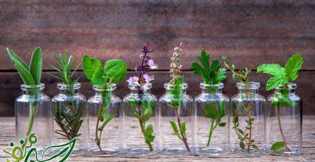 کاشت-سبزی-در-آب