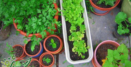 گلدان مخصوص سبزی کاری