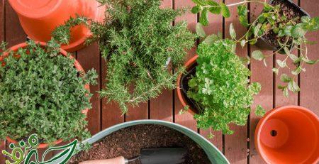 خاک مناسب برای کاشت سبزیجات در گلدان