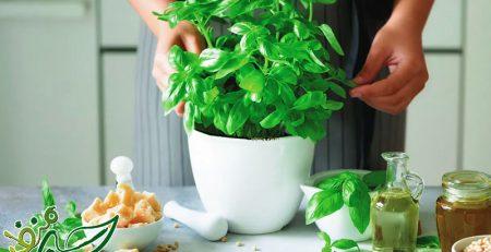 ترفند کاشت سبزیجات در خانه