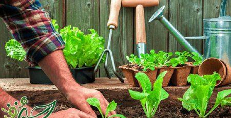 کاشت صیفی جات در بهار