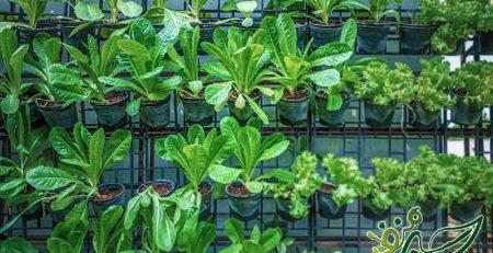 کاشت-عمودی-سبزیجات