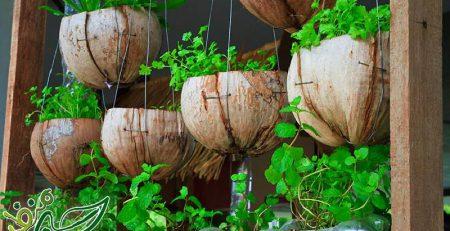 خلاقیت در کاشت سبزیجات