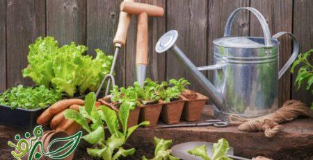 نحوه کاشت صیفی جات در باغ