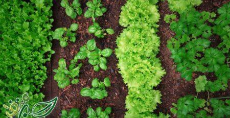 همه چیز درباره کاشت سبزیجات