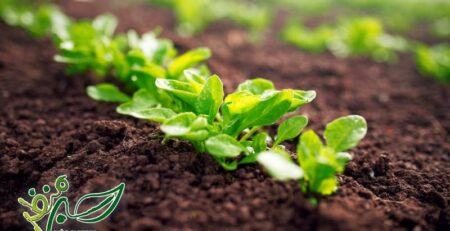 رشد سریع سبزیجات