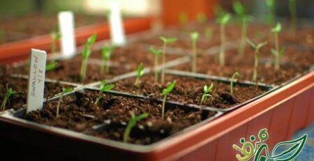نحوه کاشت بذر در جعبه