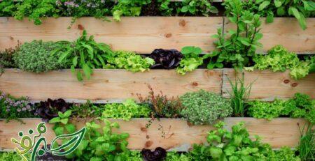 کاشت سبزی طبقاتی