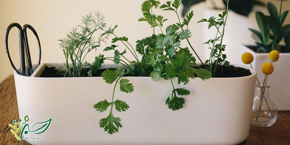 کاشت سبزی در خونه