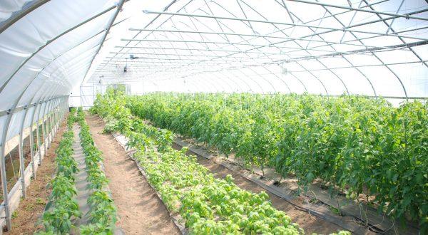 ارتباط با گلخانه سبز منظر